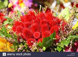 red autumn decoration made of wild teasel stock photo royalty
