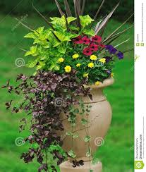 Plant Combination Ideas For Container Gardens Container Gardening Stock Photo Image Of Iresine Garden 32392300