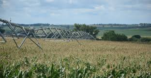 irrigated corn study climate s effect on yields varies by crop location