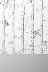 birch tree wrapping paper hieronymus
