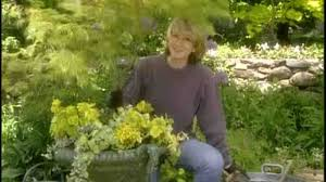video how to plant a japanese maple a decorative urn martha stewart