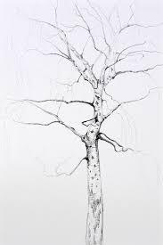 pencil drawings of trees by angela summerfield