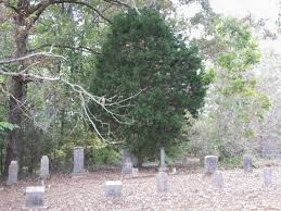 faith folklore and friends cedar trees in cemeteries