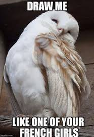 White Owl Meme - draw me like one of your french girls titanic ridiculously