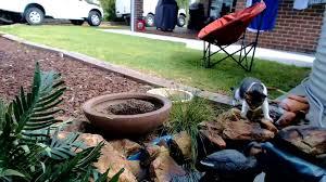 once upon a time backyard galah cam