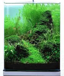 nano aquascape annika reinke and aquascaping aqua rebell