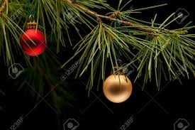 and golden matte bauble ornaments on pine tree
