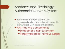 Ans Anatomy And Physiology Neurologic System Kevin Dobi Ms Aprn Ppt Download