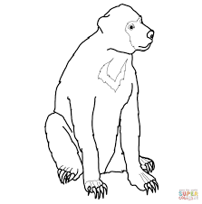 malayan sun bear coloring page free printable coloring pages