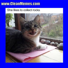 Clean Cat Memes - cat memes clean memes the best the most online page 2