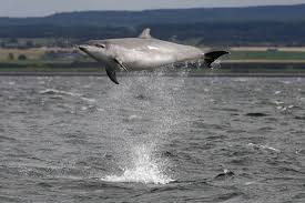Male Dolphin Anatomy How Intelligent Are Whales And Dolphins Wdc
