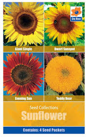 teddy sunflowers seed collection pack sunflowers evening sun