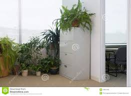 Office Plants Potted Plants By Office Window Royalty Free Stock Image Image