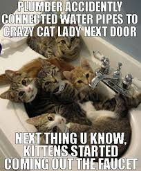 Crazy Cat Meme - plumber accidently connected our water pipes to crazy cat lady