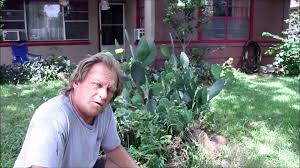 growing plants to survive cactus and aloe vera youtube
