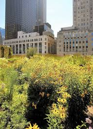 Urban Gardens Chicago In Chicago Rooftop Farming Is Getting Off The Ground