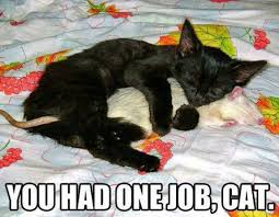 Cat Hug Meme - cat meme you had one job cat