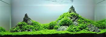 japanese aquascape aquascaping wikipedia