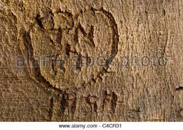 initials carved in tree heart and the initials s and c carved into a tree stock photo