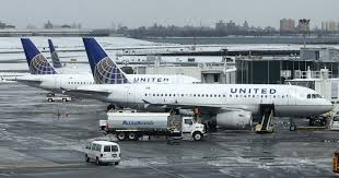 united airlines accounted for a third of animal deaths on u s