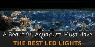 led reef lighting reviews review of the 6 best led aquarium lighting everything about do it