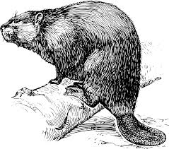 papapishu beaver png 2400 2122 beavers pinterest