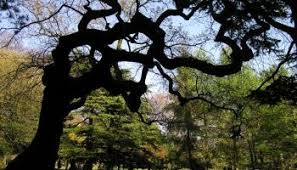 the meaning of trees the way we see the that s how the