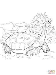j coloring pages galapagos tortoise coloring page free printable coloring pages