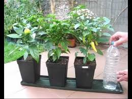 self watering plants diy self watering system for pot plants part1 hydroponics basic