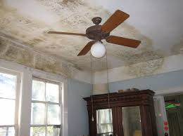 Mould Bedroom Ceiling Damp Homes And Health Risks U2014 Science Learning Hub