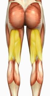 Back Knee Anatomy How To Perform Hamstring Stretches For Lower Back Pain Knee Pain
