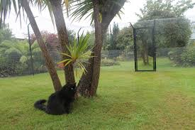 Cateracterum Palm by British Company Protectapet Propose Innovative Cat Fencing Is A