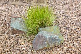 ornamental grass set in rockery stock photo image 39391571
