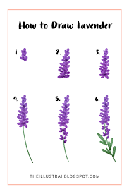 how to draw lavender in 6 easy steps beautiful drawings
