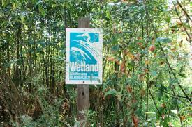 Wetland Resources Of Washington State by Cropped Wetland2 Jpg