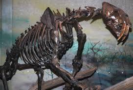 file smilodon californicus saber toothed tiger la brea asphalt