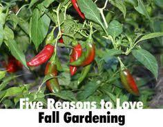 Fall Garden Plants Texas - crafty texas girls crafty how to fall family garden summer fun