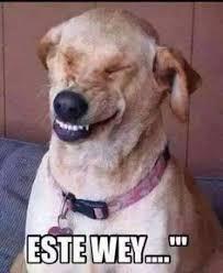 Omaiga Meme - memes omaiga perro