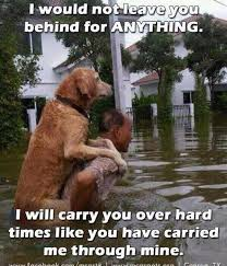 Loyalty Meme - funny pet photos on twitter sweet dog owner loyalty meme