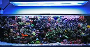led aquarium lights for reef tanks led reef aquarium lighting diy led aquarium lighting reef tank