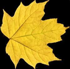darkest hour el paso leaf png 02 stock by thy darkest hour source graphic pinterest