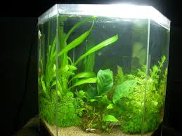 Tank Aquascape Aquascaping World Magazine El Natural Vs Tom Barr U0027s Low Tech