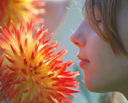 fun flower garden games have a flower scavenger hunt