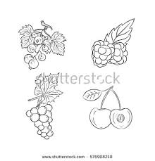 grape outline stock images royalty free images u0026 vectors