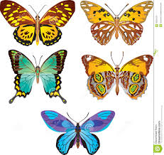 colorful butterfly vector stock vector illustration of amazing