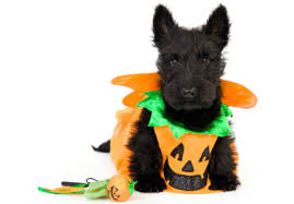 Human Dog Halloween Costumes Halloween Pet Costumes Die Policy Shop Policy Shop