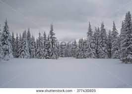 winter forest snow stock images royalty free images vectors