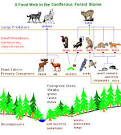 World Builders 1: Biomes Food Web in Coniferous Forest E Viau CSULA