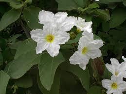 M U0026g Dd Native Plants U0026 Seeds Of South Texas