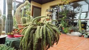 my cacti u0026 succulent indoor collection in ireland update part one